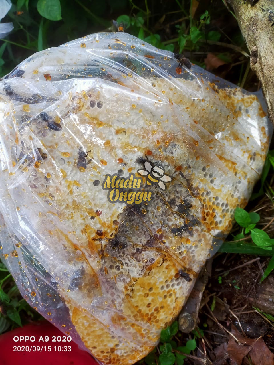 dorsata wild forest raw honey